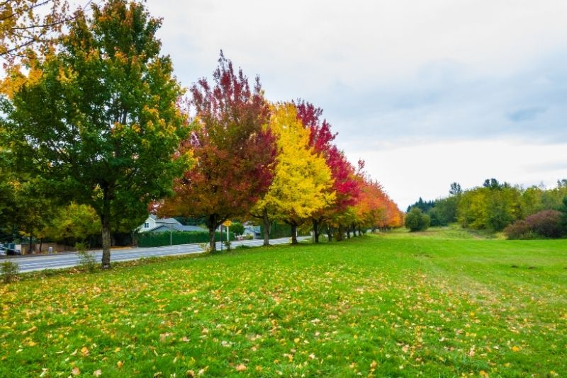 Troutdale park with fall foliage near Portland Oregon, Where to live when moving to Portland Oregon