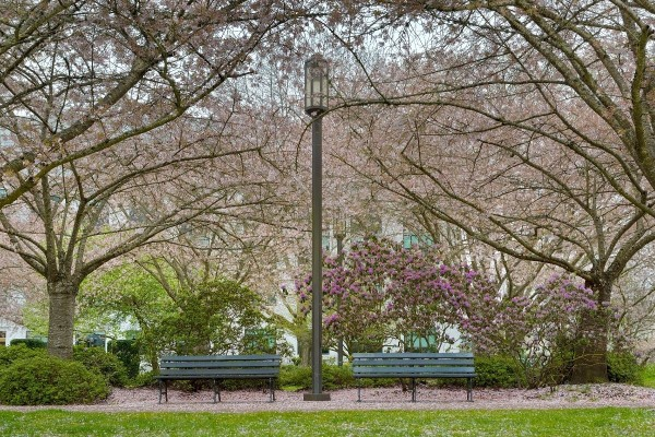cherry blossoms in Salem Oregon, pros and cons of living in Salem Oregon, PDX real estate