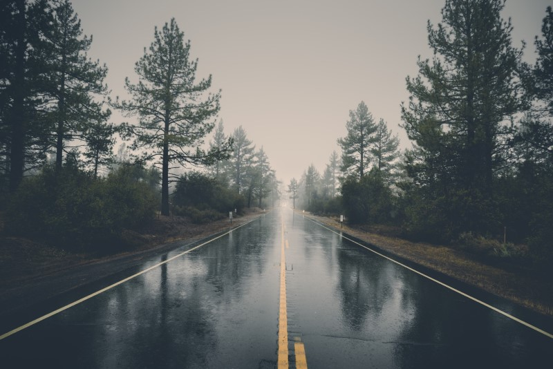 image of wet road with trees, does it rain in portland every single day, 5 worst things about living in portland OR