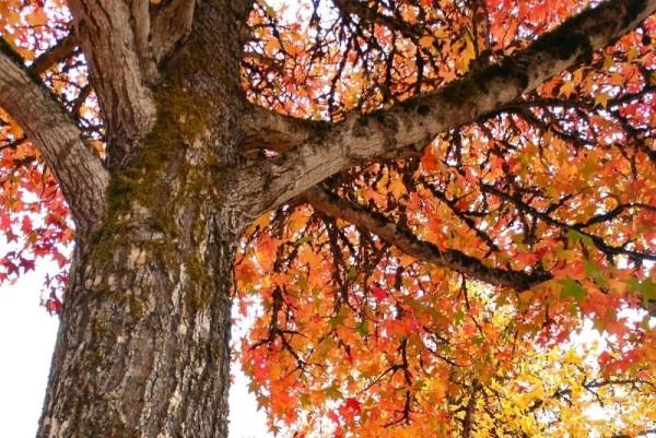 outdoors in Salem OR, Cost of living in Salem Oregon, Living in Portland Oregon real estate